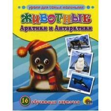 Обучающие карточки Животные Арктики и Антарктики Пособие в папке Проф-Пресс 9785378070213