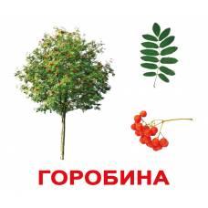 Карточки Домана большие с фактами Дерева Вундеркинд с пелёнок 2100064097034
