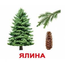 Карточки Домана большие с фактами Дерева Вундеркинд с пелёнок 2100064094415Ламинированные укр