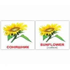 Англо-украинские карточки Домана МИНИ Квіти/Flowers 20 Вундеркинд с пелёнок 2100063276324