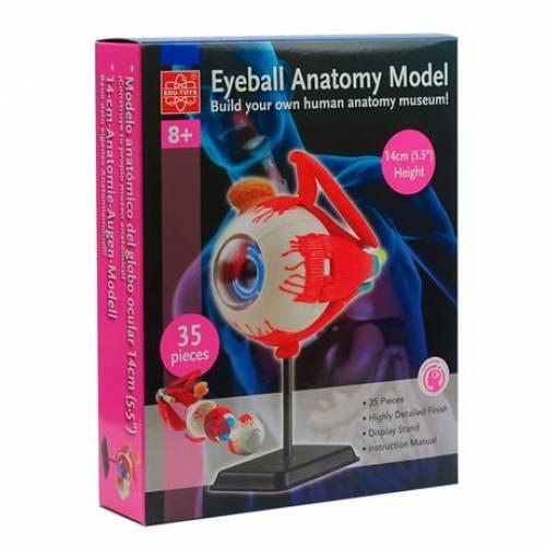 Модель глазного яблока Edu-Toys сборная, 14 см